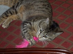 Funny Adventures in Cat Adoption, Part Eleven - The Woodwind Player