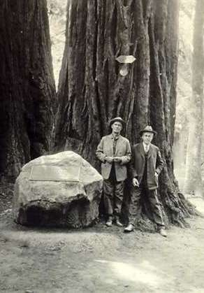 W. Kent and S. Mather standing at the base of the Pinchot tree at Muir Woods National Monument