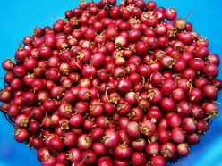 Growing Cranberries at Home in Beds or Containers