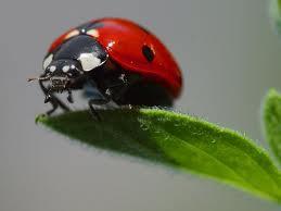 Cute ladybug!