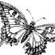 latenightowl29 profile image