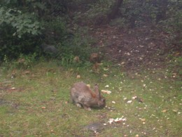 The rabbits were regular visitors.