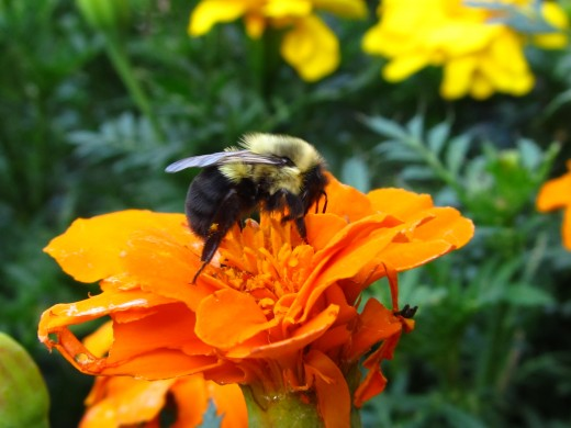 Busy as a Bee Day 3