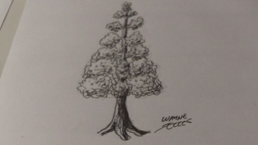 Ink tree drawing by Wayne Tully.