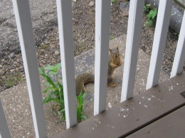 Now that's bold - squirrel posing for picture