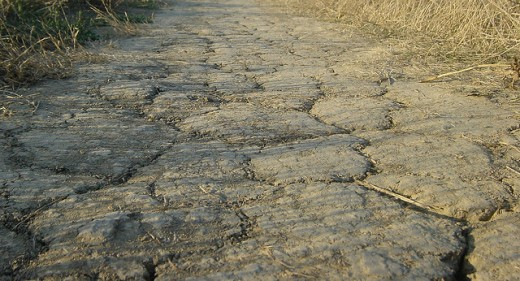 Even the dirt roads are cracked and dry.