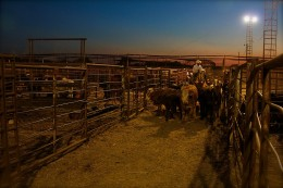 Ranchers do not have the resources to feed their cattle and are forced to sell them at a loss just to keep them alive.