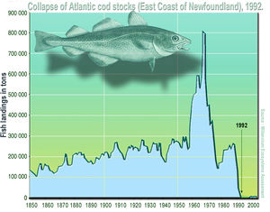 Overfishing in the 1970s and 1980s led to the total and utter collapse of the codfish in 1992.