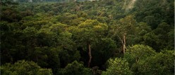 Weather and Climate - Do Forests Attract Rain?
