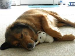 Buddy the wonder dog