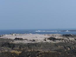 Sea Birds on the Coast of Maine
