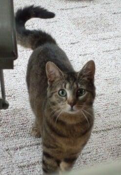 Funny Adventures in Cat Adoption, Part 13 - Pink Thread