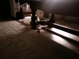 Prince Fredward hides under tables!
