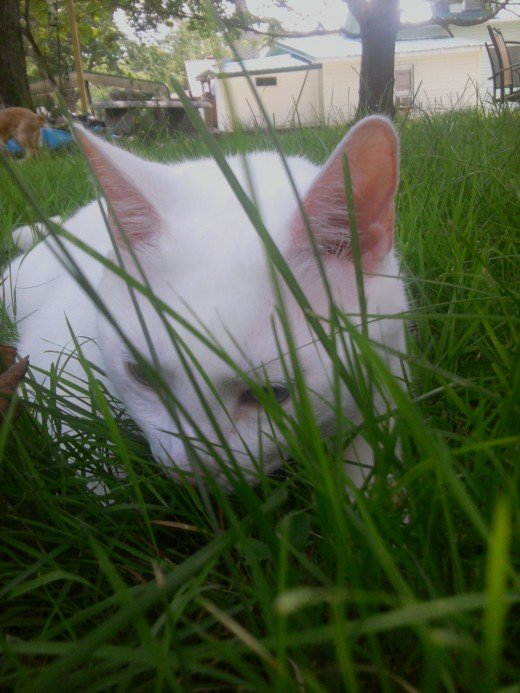 Prince Fredward cannot be seen in the grass!