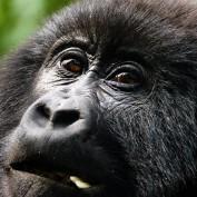 uganda-safari profile image