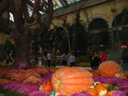 Fall at the Bellagio Conservatory... some of these pumpkins weighed over 900 lbs!