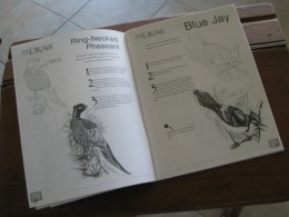 Sample of the wild bird drawing book