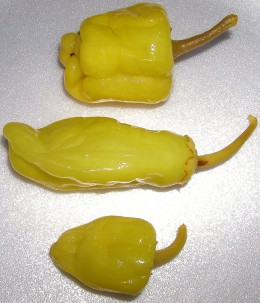 Pepperonici Pepper