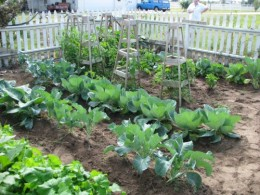 Home Gardening can be rewarding and help you become self-sufficient.
