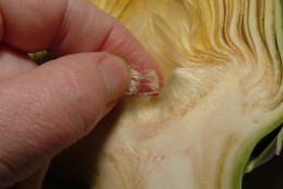 Be sure to remove the thistles from the center of the artichoke, as these should not be eaten.