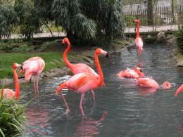 Beautiful pink flamingo's.