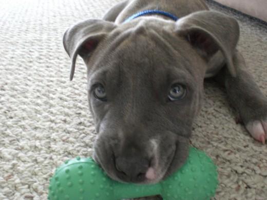 Puppy Cisco