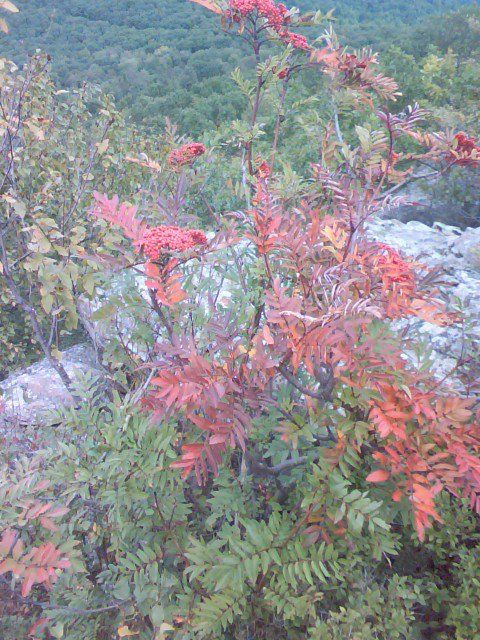 Mother nature all dressed up wearing red berries on red leaves. Late Summer 2011.