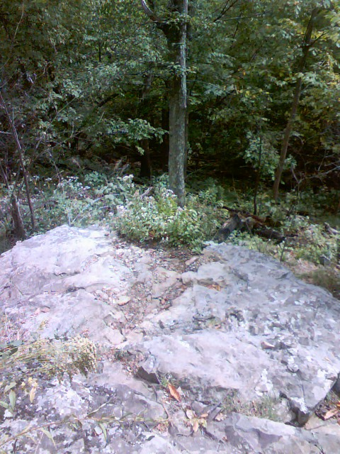 """This is the """"overlook"""" if you take the trail to the left.  Not exactly what I think of when I think of an overlook."""