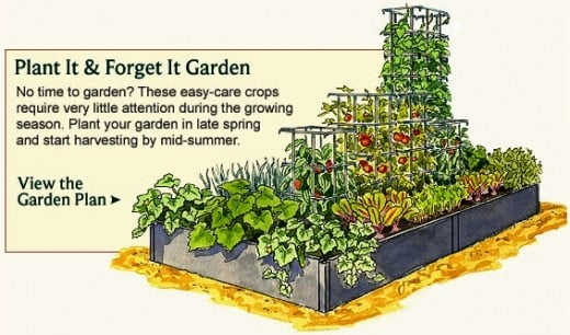 Food Garden Layout