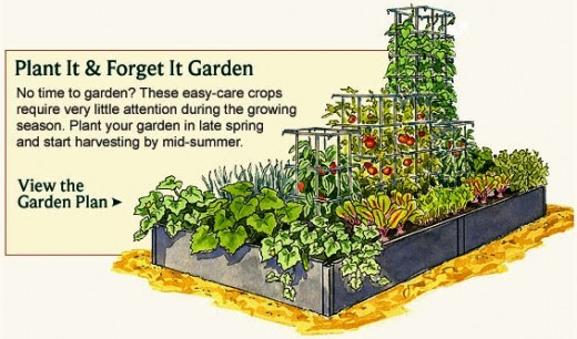 vegetable garden for beginners layout 2