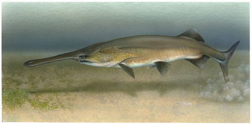 The American Paddlefish