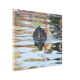 Female mallard duck on bright coloured water - Water and Wildlife series