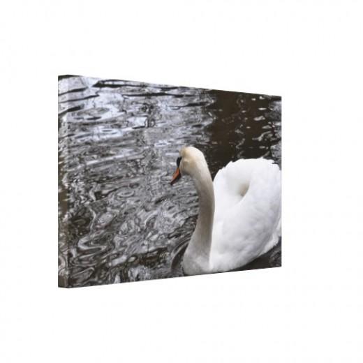 Mute swan against water