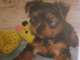 Ziggy's first toy