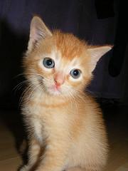 Marmalade from deenewgirl Source: flickr.com