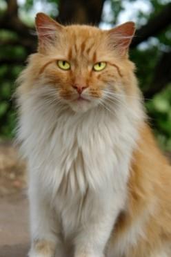 Understanding Your Cat's Personality