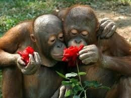 love is not just human