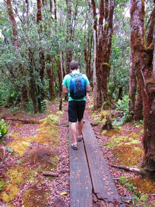 following the boardwalk trail