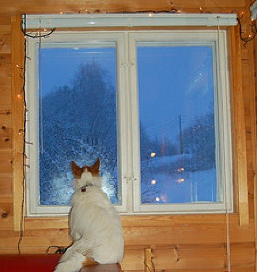 A cat fascinated by the snow falling....
