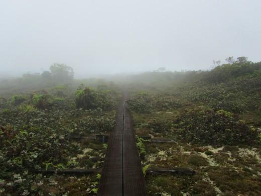 a boardwalk traverses the Alakai Swamp