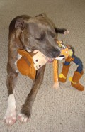 Best Dog Toys for Powerful Chewers