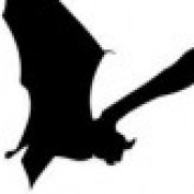 theBAT profile image