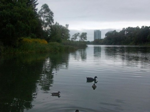 Grenadier Pond in High Park, Toronto