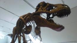Tyrannosaurus Rex at the  Royal Ontario Museum in Toronto