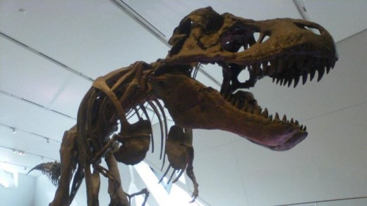 Tyrannosaurus Rex at the  Royal Ontario Museum in Toronto