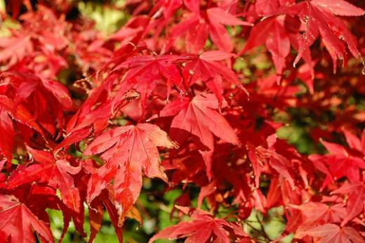 autumn   naotoiwa s essays and photos Pattern Based Writing