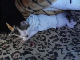 Twiggy ( 2 months)
