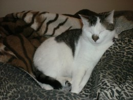 Twiggy ( 3 years old)