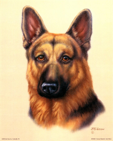 """A GERMAN SHEPHERD NAMED """"BUDDY,"""" WAS A GREAT PAL OF MINE WHEN I WAS A CHILD."""