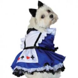 Buying a Dog Halloween Costume